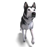 Alaskan Malamute Dog. 3D rendering with clipping Royalty Free Stock Image