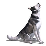 Alaskan Malamute Dog. 3D rendering with clipping Royalty Free Stock Photography