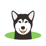 Alaskan Malamute dog on the hole,watching, vector illustration. Alaskan Malamute dog on the hole,watching  vector illustration Stock Photos