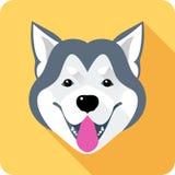 Alaskan Malamute dog icon flat design Royalty Free Stock Photos