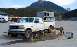 Mushers waiting to be loaded onto a helicopter at skagway Royalty Free Stock Images