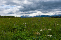 Alaskan meadow under grey clouds Royalty Free Stock Photography