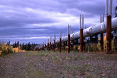 Alaskan Oil Pipeline. Trans-Alaskan oil pipeline with yellow leaves and fall colors Royalty Free Stock Photos