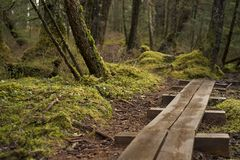 Alaskan rainforest with boardwalk. Trail going through a wet damp forest in Alaska Stock Photography