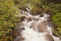 Alaskan Rainforest Waterfall Stock Image