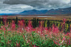 Alaskan Scenic. A beautiful scene from along the Alaskan Highway Royalty Free Stock Image