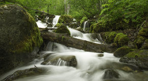 Alaskan Summer Creek. An Alaska creek flows through the back country Royalty Free Stock Photo