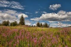Alaskan Summer Royalty Free Stock Photo