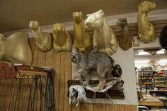 Alaskan Taxidermy shop Stock Photo