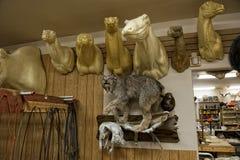 Alaskan Taxidermy shop. Internal view Stock Photo