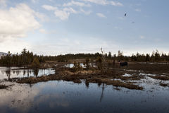 Alaskan Wetland Royalty Free Stock Photos