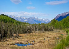 Alaskan Wilderness. Mountain, forests, and marshes of Alaska's wilderness Stock Image