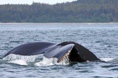 alaskiego humpback Juneau pobliski ogonu wieloryb Zdjęcia Royalty Free