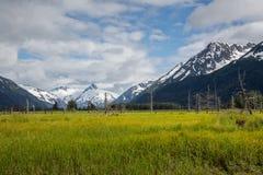 Alaskische Landschaft von Bergen und von Feldern Lizenzfreies Stockbild