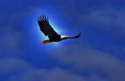 Alaskischer Adler Stockfoto