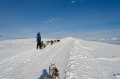 Alaskischer Malamute sleddog in den Alpen Bis zu den Bergspitzen lizenzfreie stockbilder
