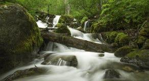 Alaskischer Sommer-Nebenfluss Lizenzfreies Stockfoto