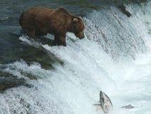 Alaskisches Brown-Bären-Fischen an den Fällen Lizenzfreie Stockbilder