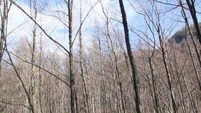 alatay διπλός γρήγορος ποταμός Ρωσία ουράνιων τόξων βουνών απόθεμα βίντεο