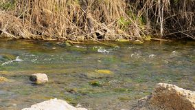 alatay διπλός γρήγορος ποταμός Ρωσία ουράνιων τόξων βουνών φιλμ μικρού μήκους