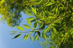 alava fagus naturalnego parka sylvatica valderejo Zdjęcia Royalty Free