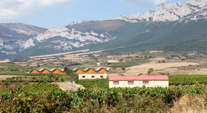 Alavesa Vineyards, La Rioja, Spain Stock Photo