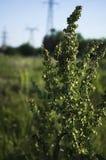 Alaz?n verde del caballo del arbusto en el sol imagenes de archivo