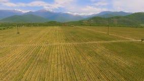Alazanivallei, wijngaarden in Georgië, traditie van wijnbereiding, satellietbeeld stock footage