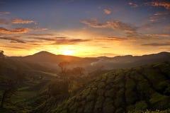 Alba agli altopiani di Cameron Immagini Stock