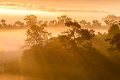 Alba al parco nazionale di Thung Salaeng Luang con foschia in FO fotografia stock libera da diritti