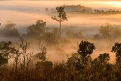 Alba al parco nazionale di Thung Salaeng Luang con foschia in FO immagini stock libere da diritti