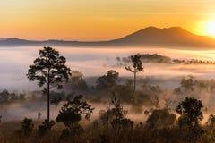 Alba al parco nazionale di Thung Salaeng Luang con foschia in FO immagine stock libera da diritti