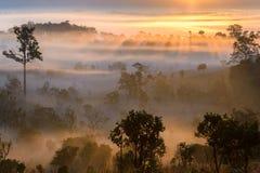 Alba al parco nazionale di Thung Salaeng Luang con foschia in FO fotografia stock