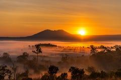 Alba al parco nazionale di Thung Salaeng Luang con foschia nella foresta, nel Phitsanulok e nel Phetchabun della Tailandia fotografie stock