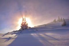 Alba all'albero congelato di mattina Montagna di Tatra Immagine Stock Libera da Diritti