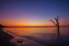 Alba alla spiaggia con l'albero della siluetta Immagini Stock