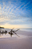 Alba alla spiaggia di Fort Myers Fotografie Stock