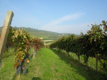 Alba Barolo vineyards Piemonte Italy royalty free stock image