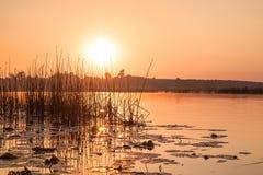 Alba, canne e grande lago i cespugli annebbiano gli alberi orizzontali verdi di estate delle siluette di mattina di paesaggio Fotografia Stock