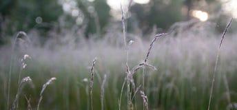 Alba che splende nella rugiada fresca di mattina Fotografia Stock Libera da Diritti