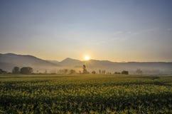Alba con il campo di mais di vista della nebbia di mattina Fotografia Stock Libera da Diritti