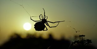 Alba con il grande ragno Fotografia Stock Libera da Diritti