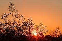 Alba con l'alone intorno al sole Fotografia Stock