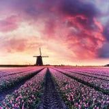 Alba d'annata sopra il campo del tulipano e del mulino a vento Immagini Stock