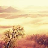 Alba de hadas Brumoso despertando en las colinas hermosas Imagen filtrada: efecto procesado del vintage Imagenes de archivo