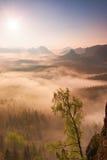Alba de hadas Brumoso despertando en las colinas hermosas Los picos de colinas se están pegando hacia fuera de fondo de niebla Foto de archivo