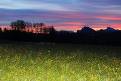 Alba del prato della montagna delle alpi Immagine Stock Libera da Diritti