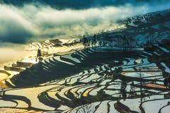 Alba del terrazzo di Yuanyang Fotografie Stock Libere da Diritti