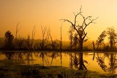 Alba della curvatura del Brazos Fotografia Stock