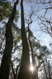 Alba della foresta immagine stock libera da diritti
